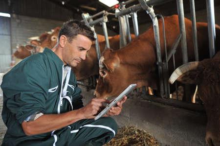 animal breeding: Farmer in barn using digital tablet