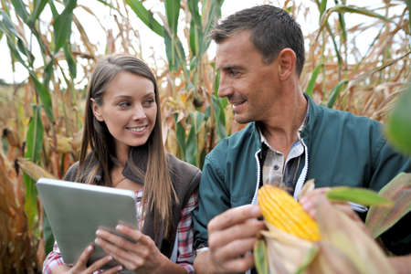 agronomist: Farmers in cornfield using electronic tablet