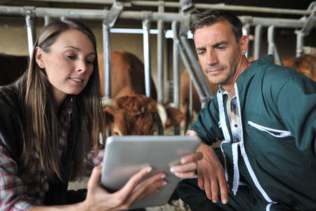 android tablet: Farmer and veterinarian checking on cows