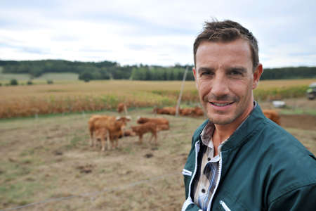 herdsman: Herdsman standing in front of cattle in country field