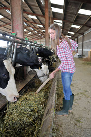 Smiling breeder woman giving food to cows photo