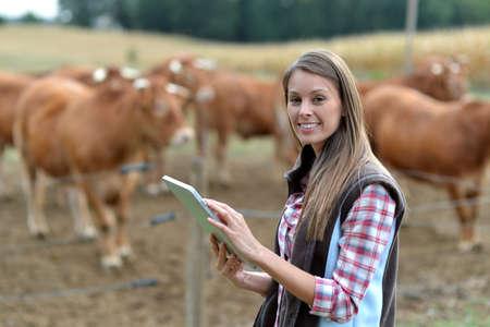 agricultor: Mujer agricultor delante de ganado que usa la tableta