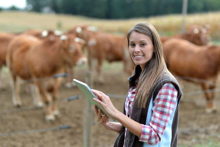 farmer's: Woman farmer in front of cattle using tablet