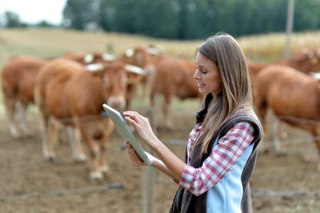 Woman farmer in front of cattle using tablet photo