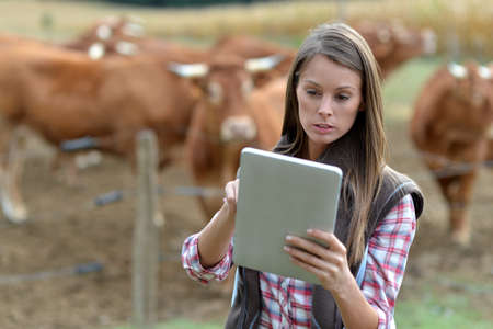 herdsman: Woman farmer in front of cattle using tablet