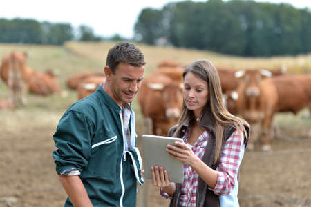 farmer's: Farmer and woman in cow field using tablet Stock Photo