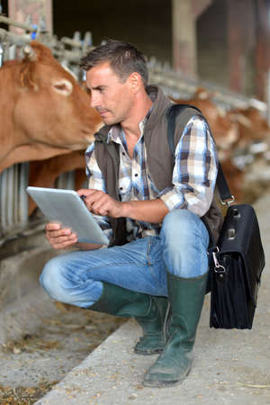 Breeder in cow barn using digital tablet photo