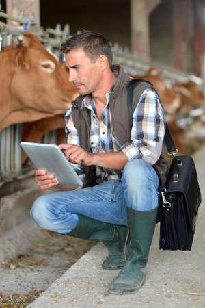 breed: Breeder in cow barn using digital tablet