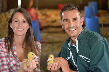 Cheerful couple of duck breeders holding baby ducks photo