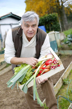 Senior man in kitchen garden picking vegetables photo