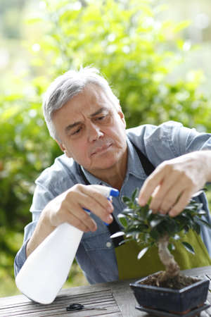 hobby: Senior man watering bonsai leaves