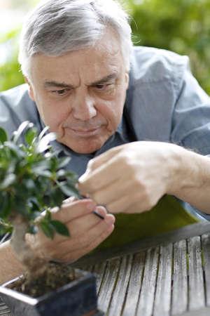 Senior man taking care of bonsai plant photo