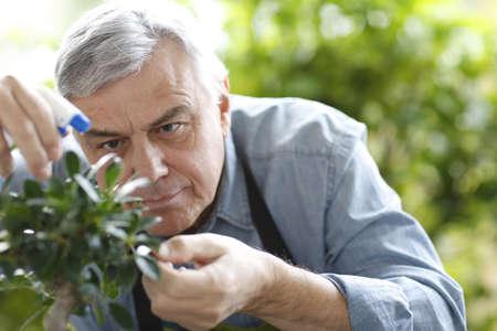 Senior man watering bonsai leaves photo
