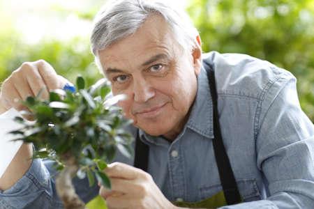 asian gardening: Senior man watering bonsai leaves