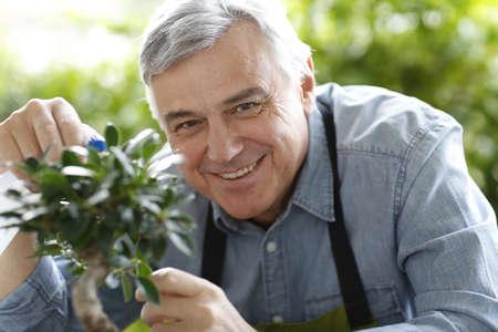 senior man: Senior man watering bonsai leaves
