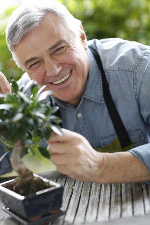 asian gardening: Senior man taking care of bonsai plant