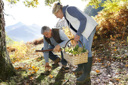 Senior couple in forest picking mushrooms photo
