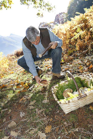 60s adult: Senior man knelt in forest looking for ceps Stock Photo