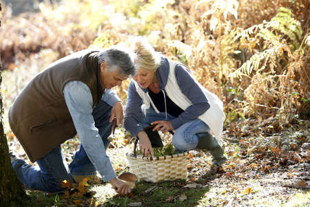 Senior couple in forest picking mushrooms Stock Photo - 16321407