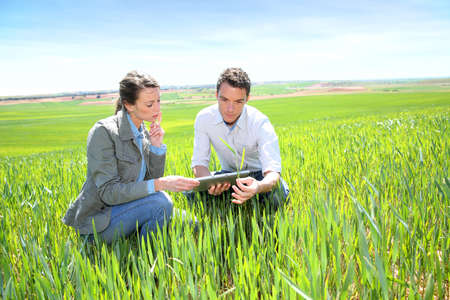 farmer's: Agronomist looking at wheat quality with farmer