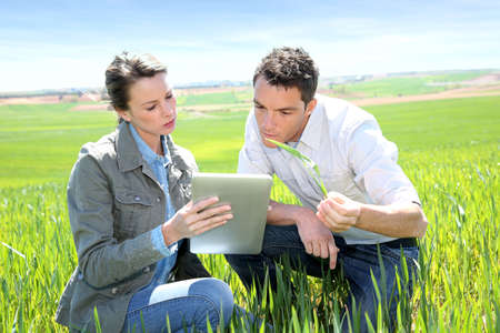 agronomist: Agronomist looking at wheat quality with farmer