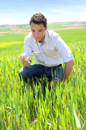 Farmer kneeling in wheat field Stock Photo - 19821905