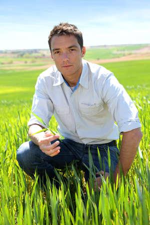 agronomist: Farmer kneeling in wheat field Stock Photo