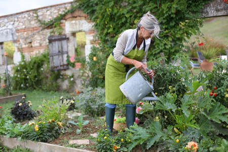 home garden: Senior woman watering vegetable garden Stock Photo