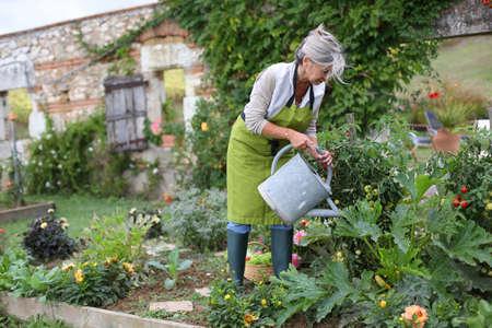 Senior woman watering vegetable garden Imagens