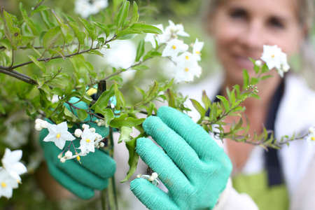 cultivating: Senior woman cultivating flowers