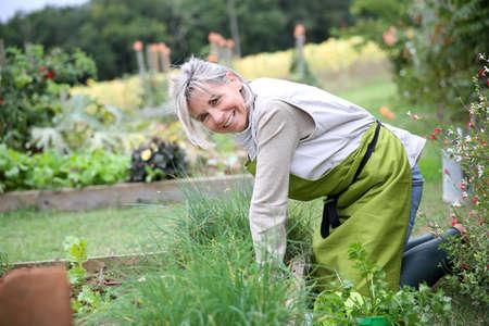 年配の女性は家庭菜園の芳香のハーブを植えること