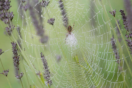 web2: Closeup of spiderweb with morning dew