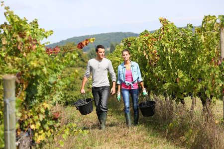 Couple of winegrowers walking in vineyard photo
