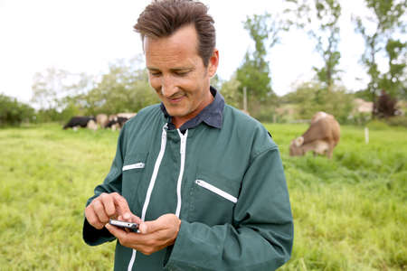 Farmer in field using smartphone, cows in background