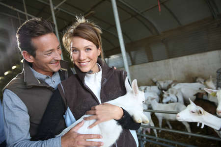Couple of breeders in barn carrying baby goat photo