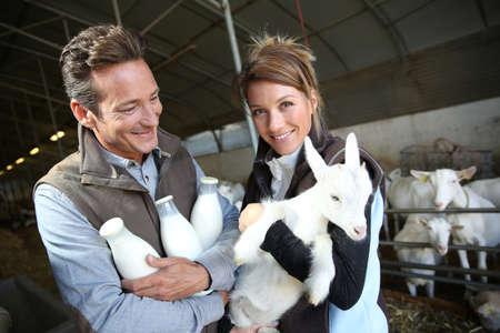 cabra: Pareja alegre de los criadores en el granero con cabras Foto de archivo
