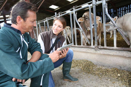 farm worker: Veterinarian with breeder checking on herd Stock Photo