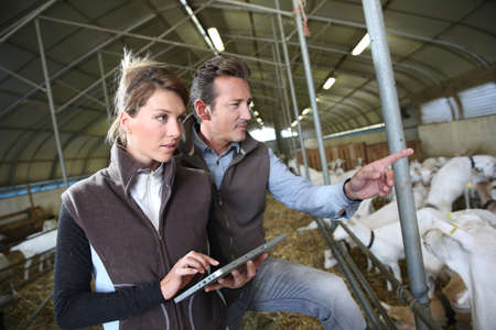 Couple of farmers using tablet in barn photo