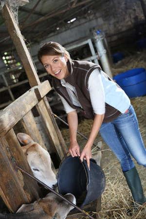 mujer arrodillada: Vacas de alimentación criador Mujer en el granero