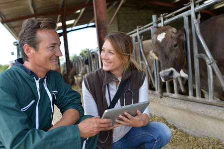 Veterinarian with breeder using tablet photo