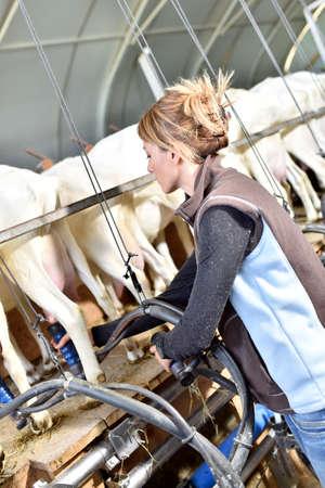 breeder: Breeder in barn ready for goat milking