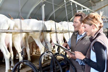 搾乳のための納屋で農民を使用してタブレットします。 写真素材