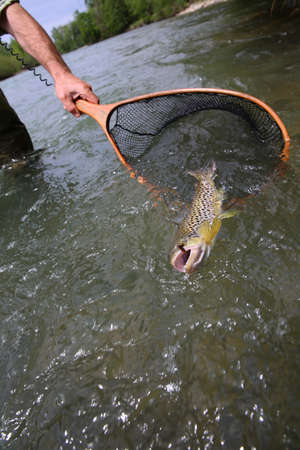 caught: Closeup of brown trout caught by fisherman Stock Photo