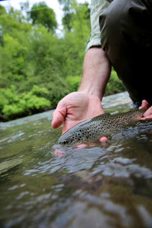 recently: Fisherman holding recently caught brown trout Stock Photo