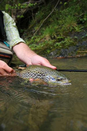 brown trout: Closeup of brown trout caught by fisherman Stock Photo