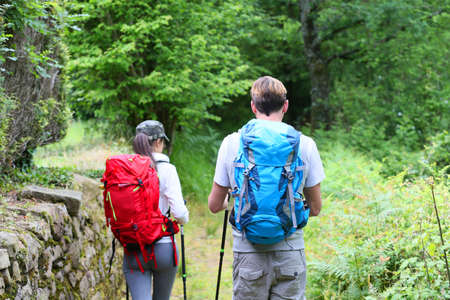 trekking pole: Back view of couple of hikers walking in forest path Stock Photo