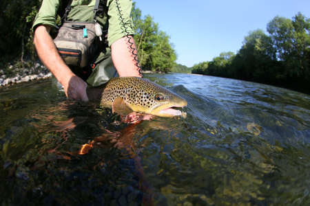 flyfishing: Closeup of fly-fisherman holding brown truit in river