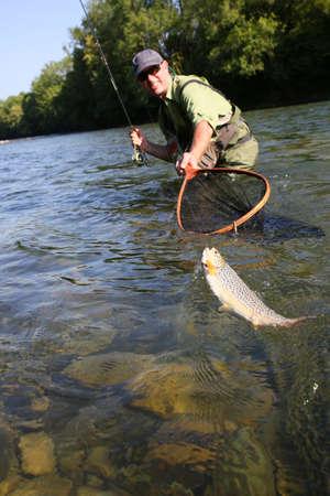 pesca: Fly-pescador captura de la trucha marrón en el río Foto de archivo
