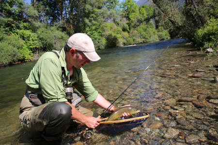 brown trout: Fly-fisherman in water catching brown trout fish Stock Photo