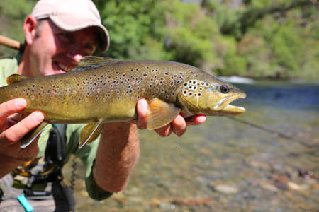 flyfishing: Fly-fisherman holding brown trout recently caught Stock Photo
